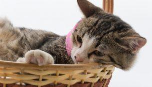 schoonmaaktips voor kattenliefhebbers