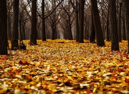 schoonmaak herfst