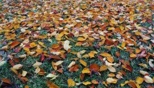 tuinonderhoud herfst