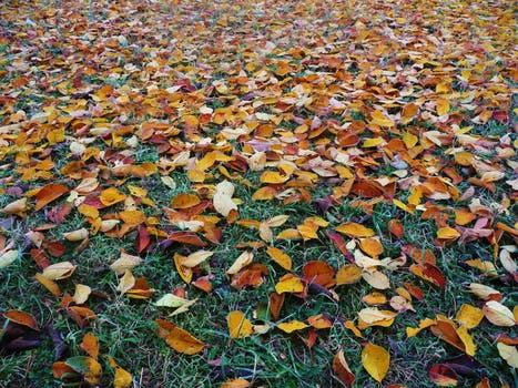 Winterklaar Maken Tuin : Je tuin winterklaar maken in oktober spillmytea