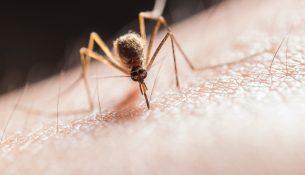 voorkom muggen in huis