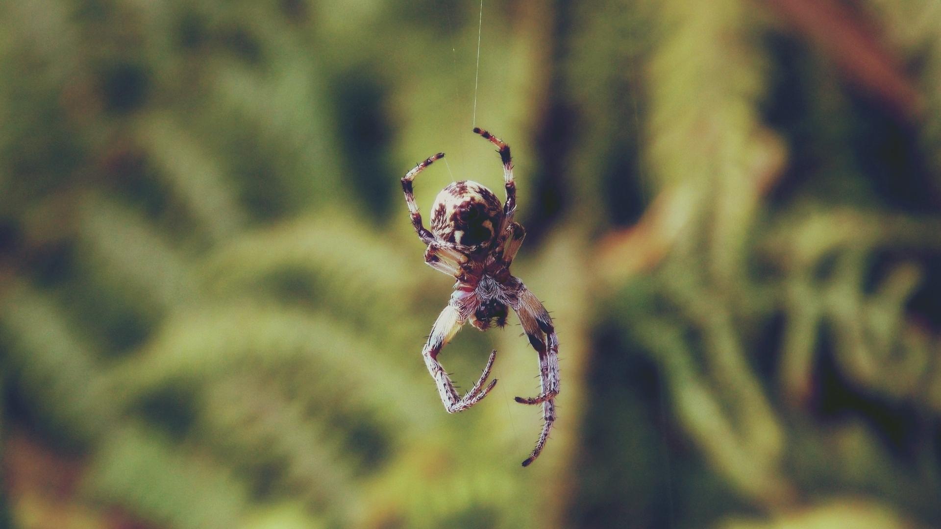 voorkom-spinnen-in-huis
